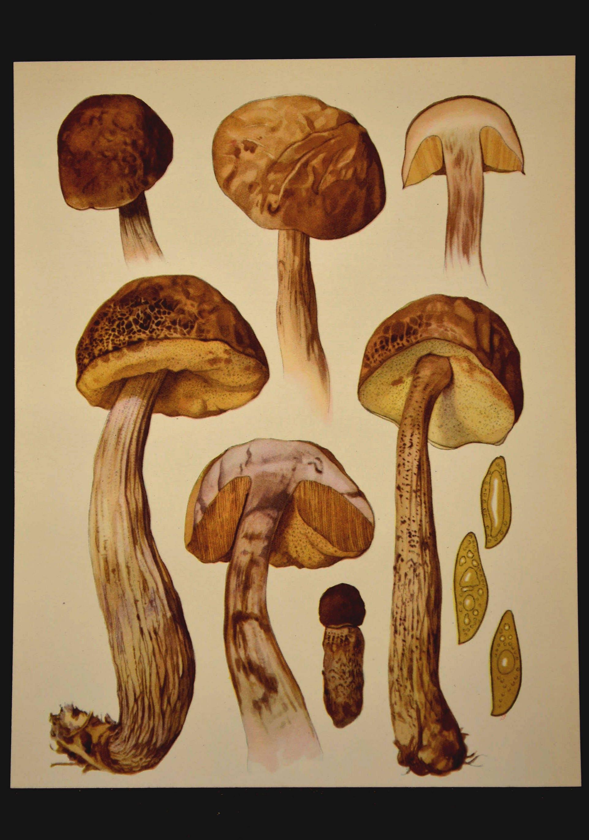 Edible Mushroom Wall Art Kitchen Print Vegetable Decor