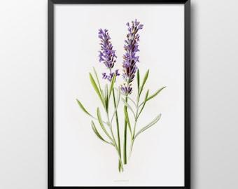 Handdrawn lavender print, Printable lavender, Wall print, Shabby chick decor, Rustic decor, Wedding, Romantic decor 229