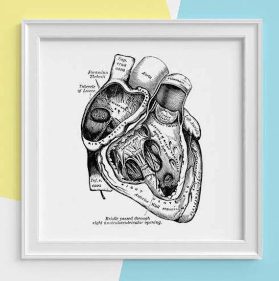 Human Heart anatomical study Print Human anatomy print. Science student gift, Human heart art print, Doctor student SKA039SQ1