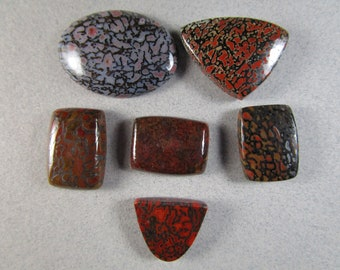 Fossil Dinosaur Bone Cabochons / Gembone / Fossil Bone / Fossilized / Choice of Cabs
