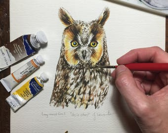 Long-eared Owl - Original Watercolour study/portrait