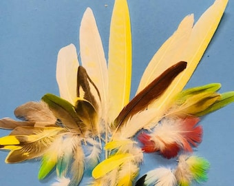 Assortment of 30 Parrot Flight feathers to Plumage feathers for 6.99