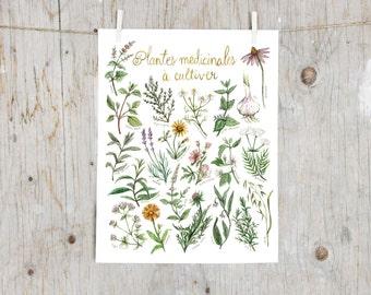 Print Medicinal Plants To Grow   Poster botanical paintings, Print medicinal plants, Herbalism   Gardening    Alternative Medicine