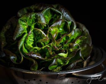 Red Butter Lettuce - Food Photography, Kitchen Decor, Home Decor