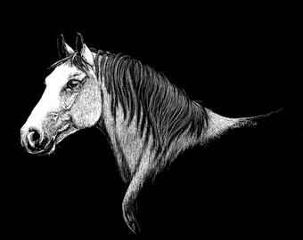 Original 8x10 Horse Scratchboard