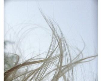 Cheveux d ange (Macro Photography - Fine Art Print - Child Hair- Still Life - Figure - Wind - White)