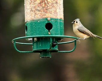 Tufted Titmouse at Feeder 1