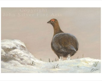Red Grouse in the snow. Wildlife Portrait by award winning artist John Silver. Personally signed A4 Print. WI001SP