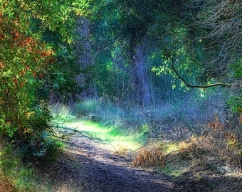 """Landscape Photography - Path in a blue forest in Autumn, nature photography, emerald green, forest wall art, blue wall decor, fall - """"Well"""""""
