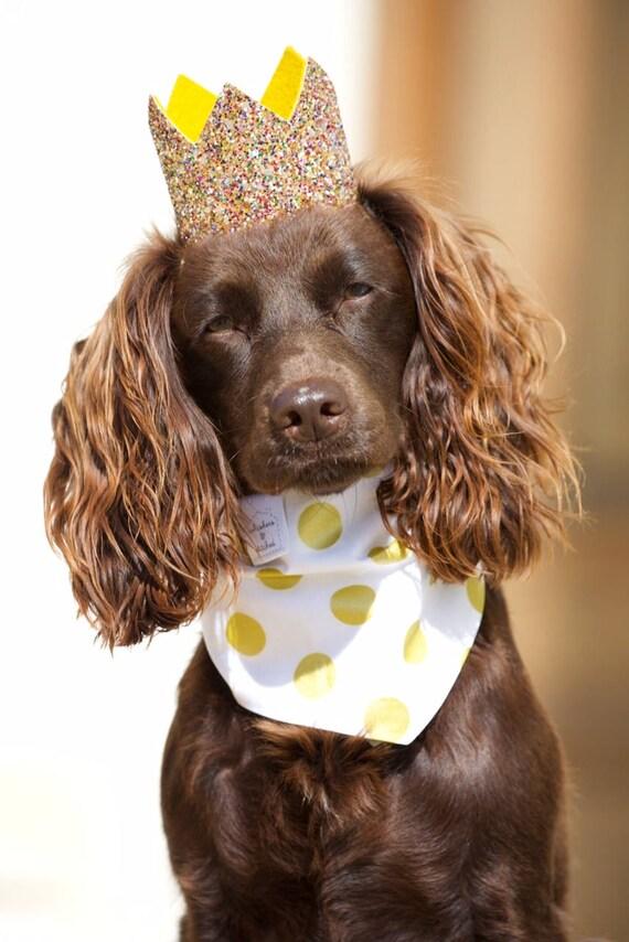 Pet Birthday Hat || Dog Birthday Hat || Cat Kitty Puppy Pig Birthday Hat ||  Pet Birthday Crown || Dog Clothes