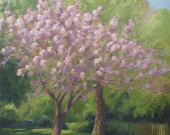 Cherry tree in blossom, Springtime