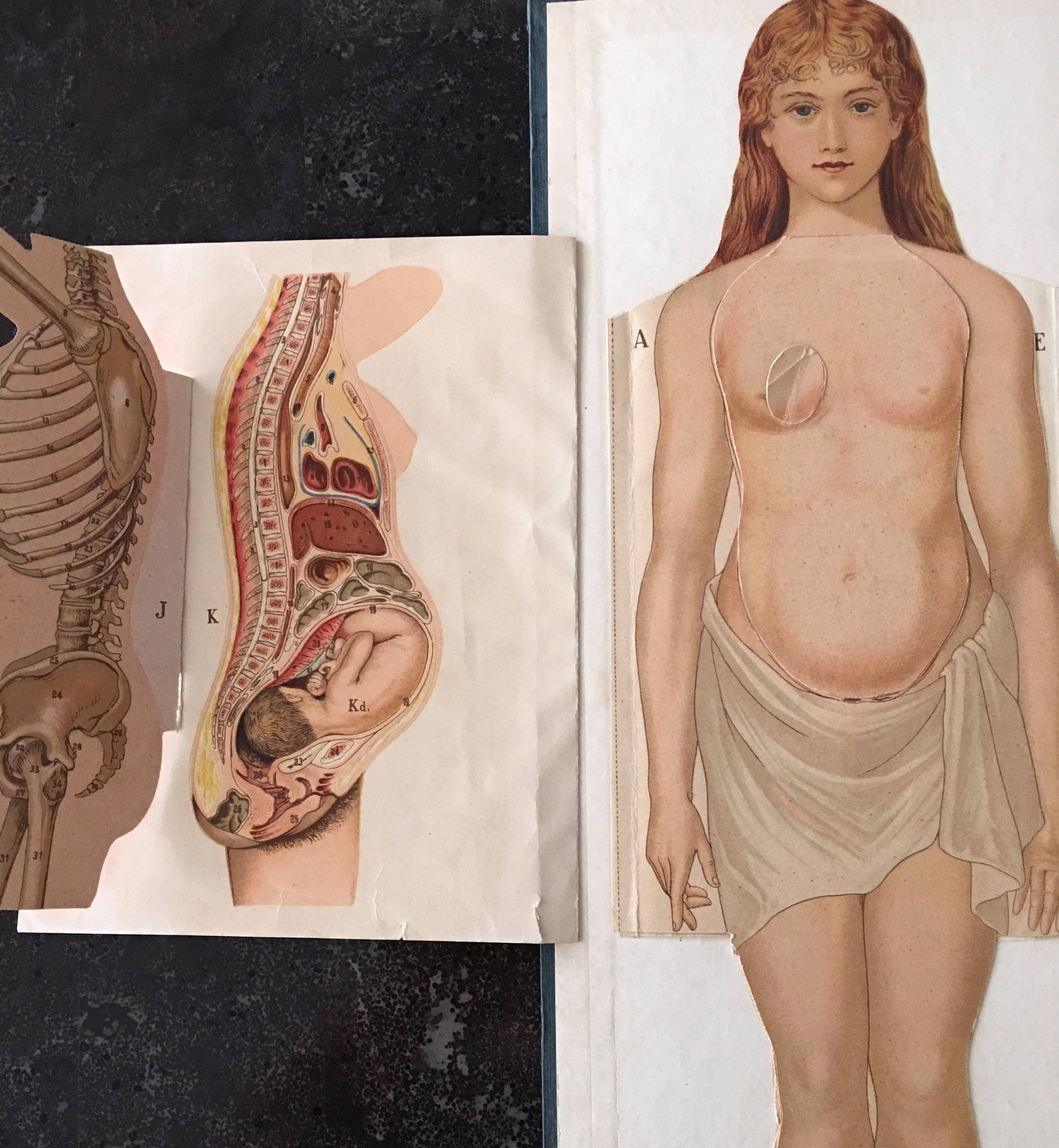 Dr. Minders Anatomical Manikin of the Female Body Book Early 1900s ...