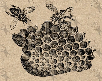 Antique image Honeycomb Bee Instant Download Digital printable vintage picture clipart graphic scrapbooking burlap decor etc HQ 300dpi