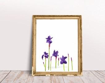 Iris Art, 8x10 and 5x7 Printable, Purple Iris Flowers, Flower Printable, Hand Drawn