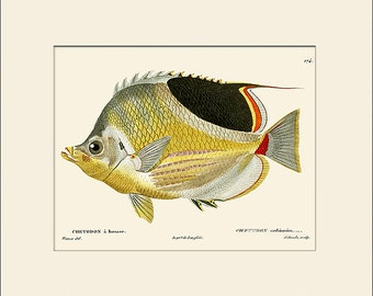 Vintage Fish Print #174, Art Print with Mat, Note Card, Natural History, Beach House Wall Art, Nautical Art, Sea Life Prints, Wall Decor