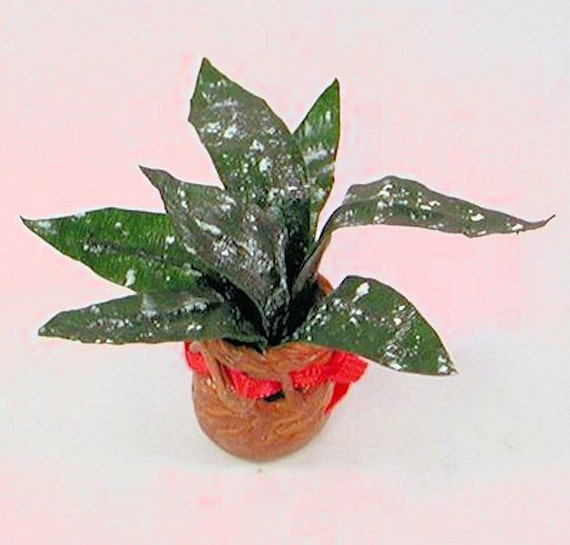 pretty dieffenbachia house plant. Variable Dieffenbachia houseplant white spots on dark green leaves in  basket with red ribbon 1 12 dollhouse scale Handmade USA