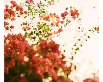 Nature Photograph - Bougainvillea Art - Flower Photograph - Pink Art - Bougainvillea Morning - Fine Art Photograph - Floral Art - Botanical
