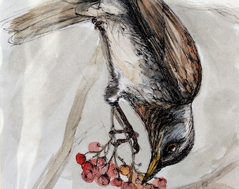 Songthrush eating berries, wildlife art, original pen and watercolor painting