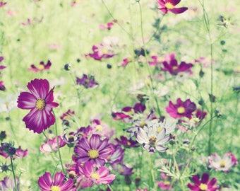 "Cosmos flowers print - purple green wall art - botanical print - flower meadow print - boho living room art  ""Cosmos Garden"""