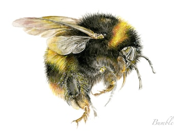 Bumble bee picture - A4 limited Edition Print