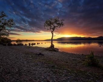 The Lone Tree, Loch Lomond