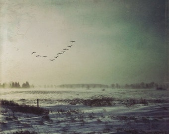 winter photo, landscape photo, barren field, farm, light, dreamy, yellow, blue, sunrise, birds, home decor, morning sun, ontario, country