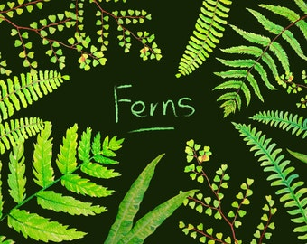 Hand painted watercolor fern fronds fern leaves digital clipart instant download for greeting cards wall decor