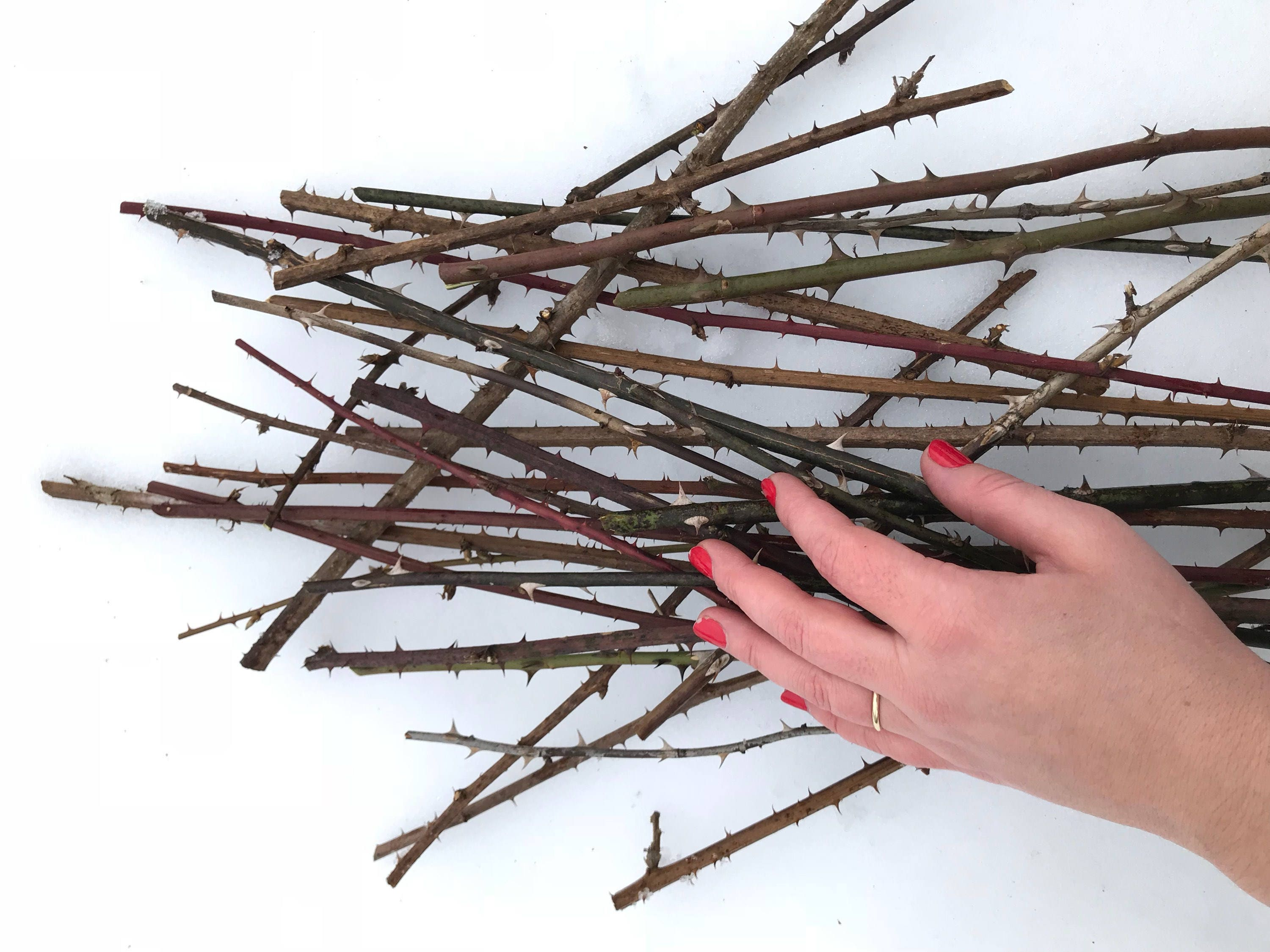 Thorn branches dried rose stems for vases and home decor zoom reviewsmspy