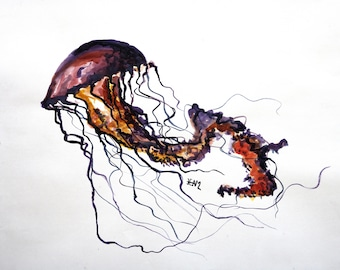 Jellyfish drawing ink on paper