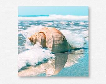 Sea Shell Printable, Sea Shell Download, Sea Shell Photo, Sea Shell Print, Sea Shell Art, Seashell Printable, Seashell Download,Sea Life Art