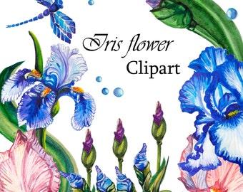 Flower Iris Watercolor Clipart. Hand painting flower. Digital png.Scrapbooking.
