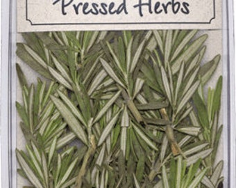 Pressed Rosemary (herb) 20 Pieces