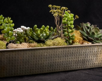 Succulent's Displayed in a Vintage Bread Pan