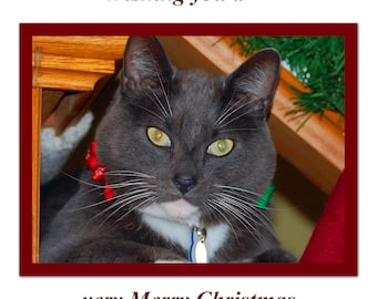 Cat Christmas Card Cat wishes you a very Merry Christmas