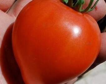 "Wes"" Heart Shaped Tomato, Heirloom/OP rare 10+ seeds"