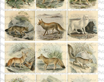 Vintage Foxes Digital Download Collage Sheet 2.5 Inch Square