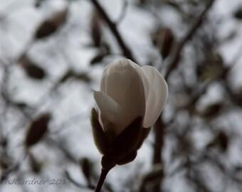 Fine Art Photography -- A Single Bud