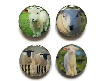 Sheep magnets or sheep pins, lambs, refrigerator magnets, fridge magnets, office magnets