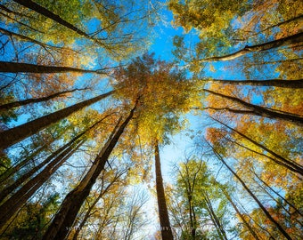 Smoky Mountains Photography Print - Picture of Sky View of Trees and Fall Foliage in Tennessee Autumn Nature Photography Home Decoration