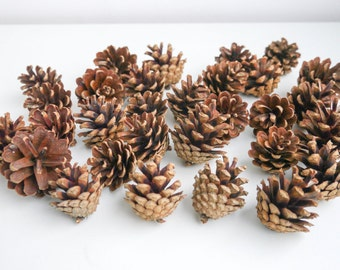 30 small pine cones, woodland wedding, rustic decoration, crafting supplies wooden,natural decoration, wreaths, bouquets