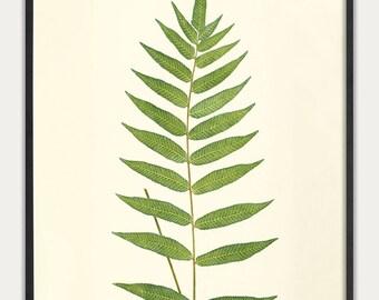 Fern wall art, Fern Botanical Art, Fern Print, Fern Illustration, Vintage Fern Prints,  Botanical Art Prints, Antique Botanicals