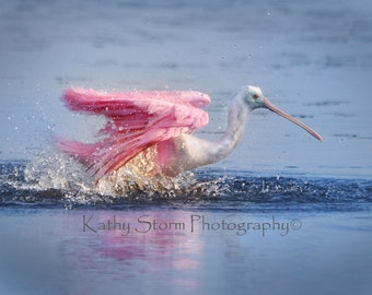 Roseate Spoonbill, Florida birds,  wildlife photography,  Wall art for home decor.  FREE SHIPPING!