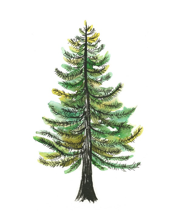Items Similar To Watercolor Evergreen Tree Art Print