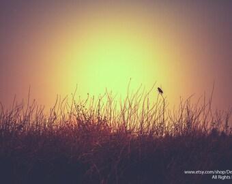 Nature's Songbird -Red Winged Black Bird Singing -Sunrise Sunset Silhouette -  Home Decor Fine Art Print - Wall Art -Brown Yellow Black