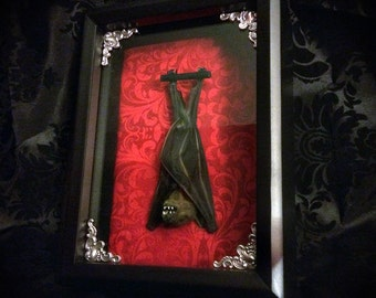 Real Taxidermy Bat Shadowbox - Real Bat - Gothic Gift - Bat Gift - Gothic Decor - Halloween Decor - Christmas Gift - Bat Decoration