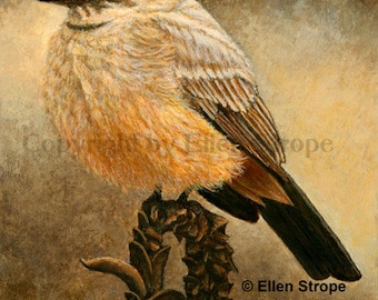 ACEO Card, Giclee print, Say's Phoebe, bird art, bird ACEO, ACEO cards, bird decor, Ellen Strope, prints, art, song birds