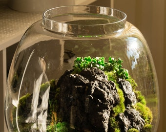 Open Scenic Terrarium with Moss and Succulents