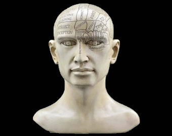 8 inch Phrenology Head  Beginners Divination Tools  Ancient Psychic Reading Methods and Tools