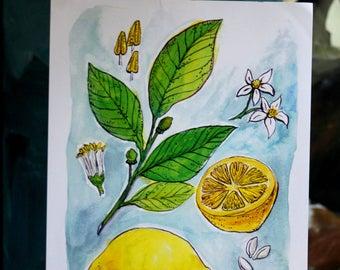Lemon Botanical Print 8 1\2x11