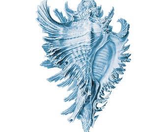Blue Sea Shell Print. Seashell Print for Blue Bathroom. Coastal Home Decor, Blue Seashell Print. Blue Shell Bedroom Picture. Beach Bathroom